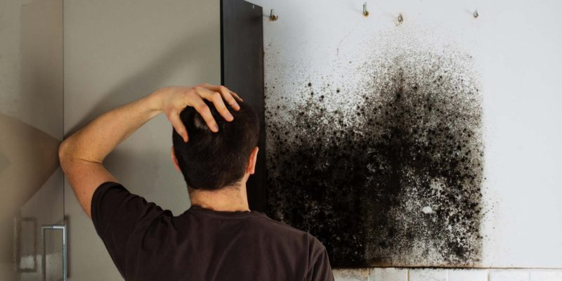 Nashville Water And Mold Remediation Services